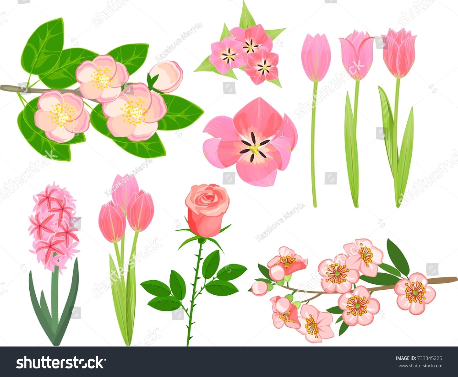 Set Of Different Garden Plants With Pink Flowers On White Background