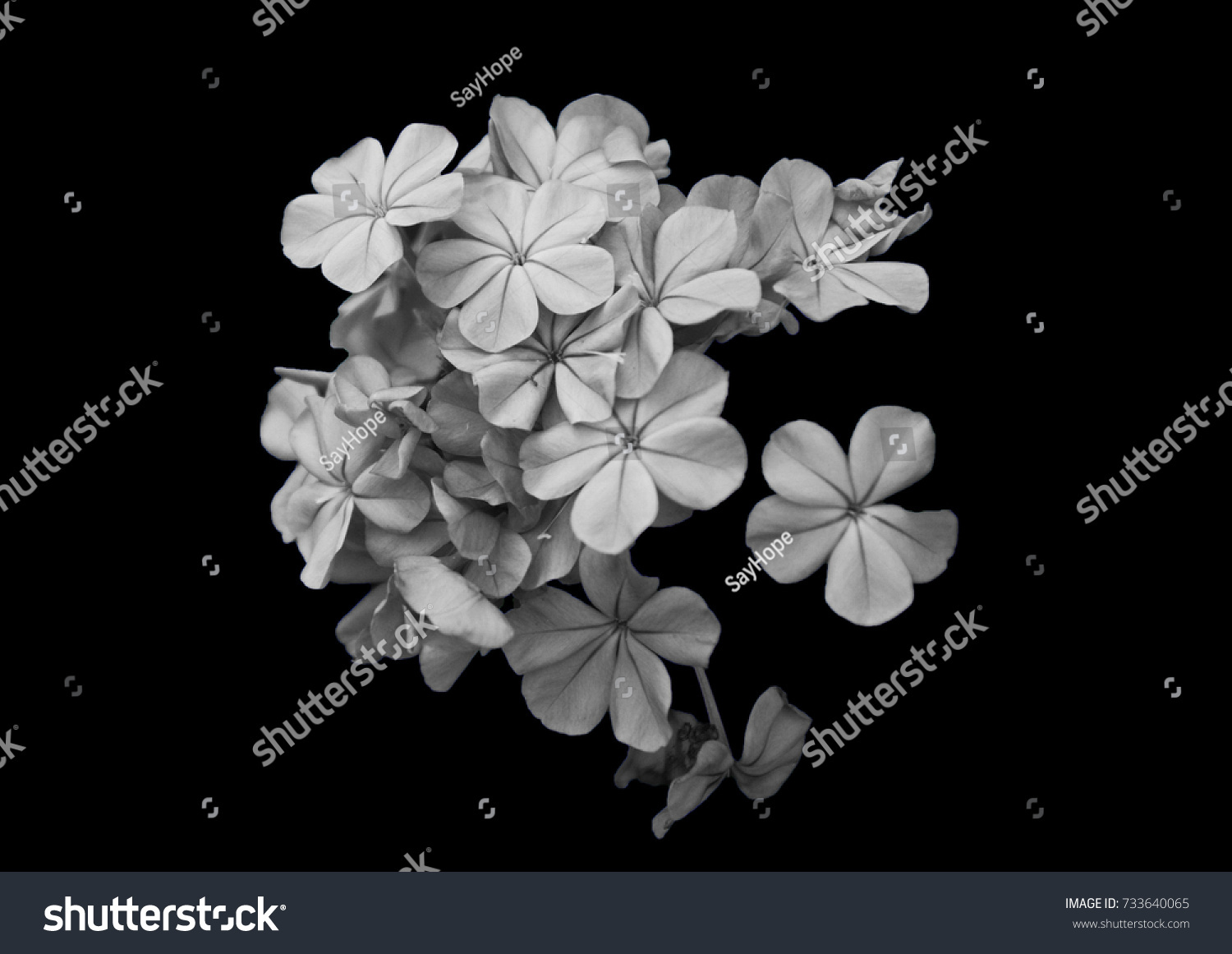 Black And White Flowers Ez Canvas