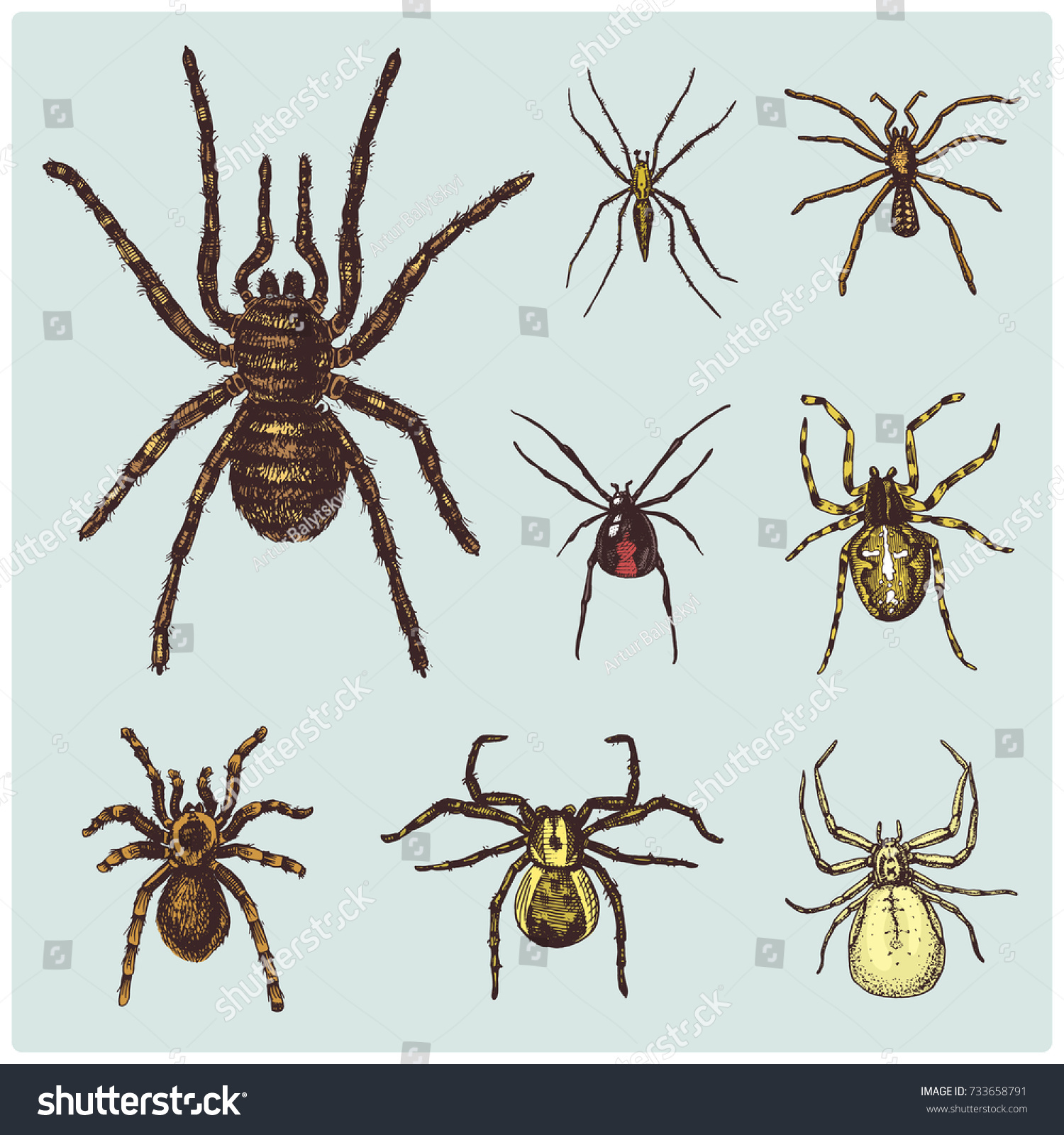 Spider Arachnid Species Most Dangerous Insects Stock Photo (Photo ...