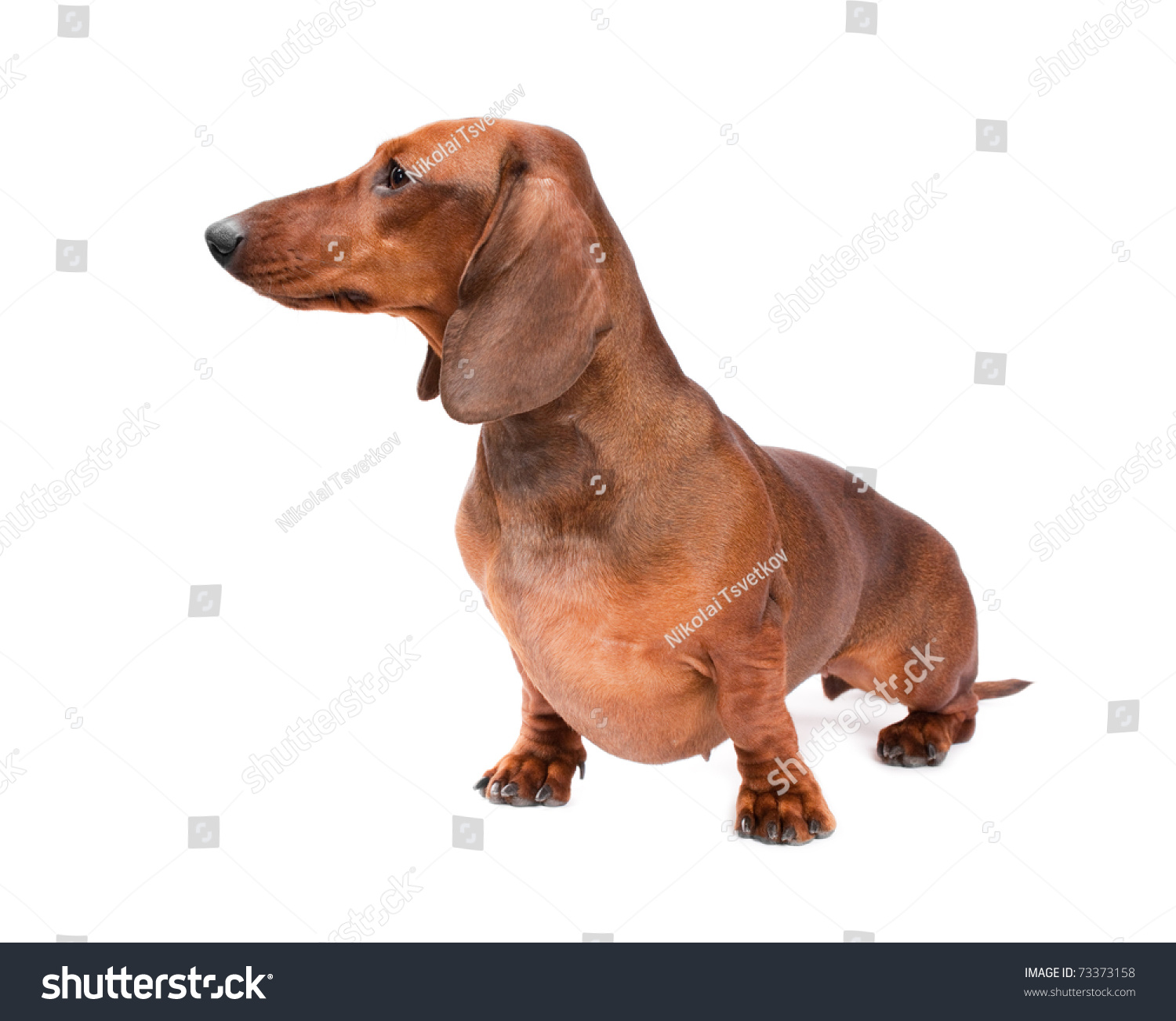 Fantastic Wirehaired Dachshund Breeders Ensign - Electrical Diagram ...