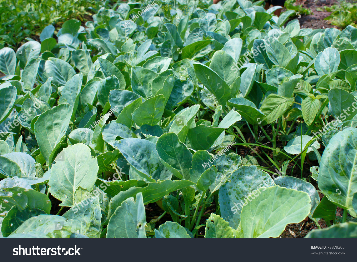 how to cook fresh kale from the garden