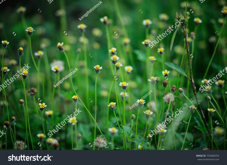 Grass Flower In Spring Season With Blur Background Ez Canvas