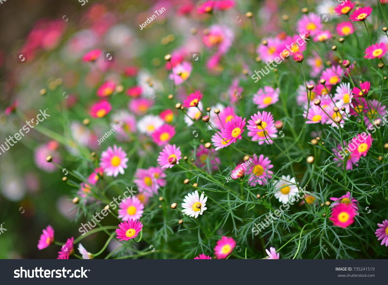 Various Species Of Colorful Flowers Blooming During Spring In