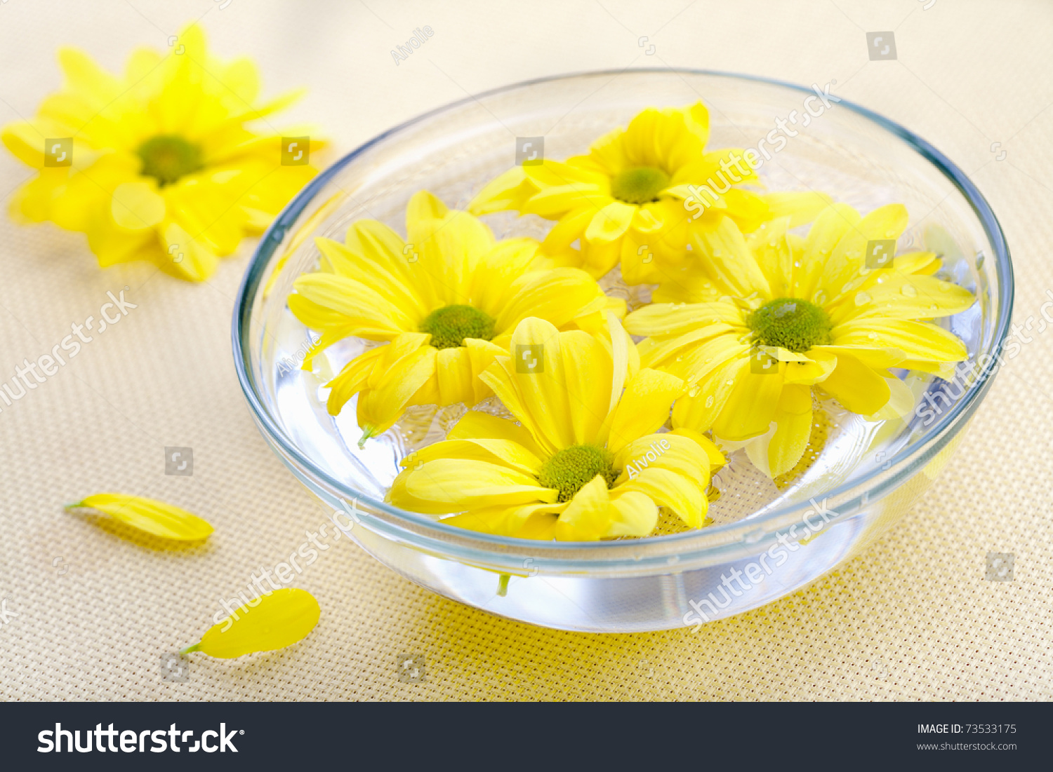 Yellow Daisies Flowers Glass Bowl Spa Stock Photo Edit Now