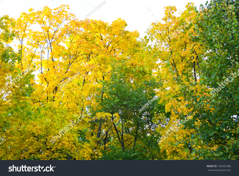 Trees Changing Color Green Yellow Tsaritsyno Stock Photo 735405388 ...
