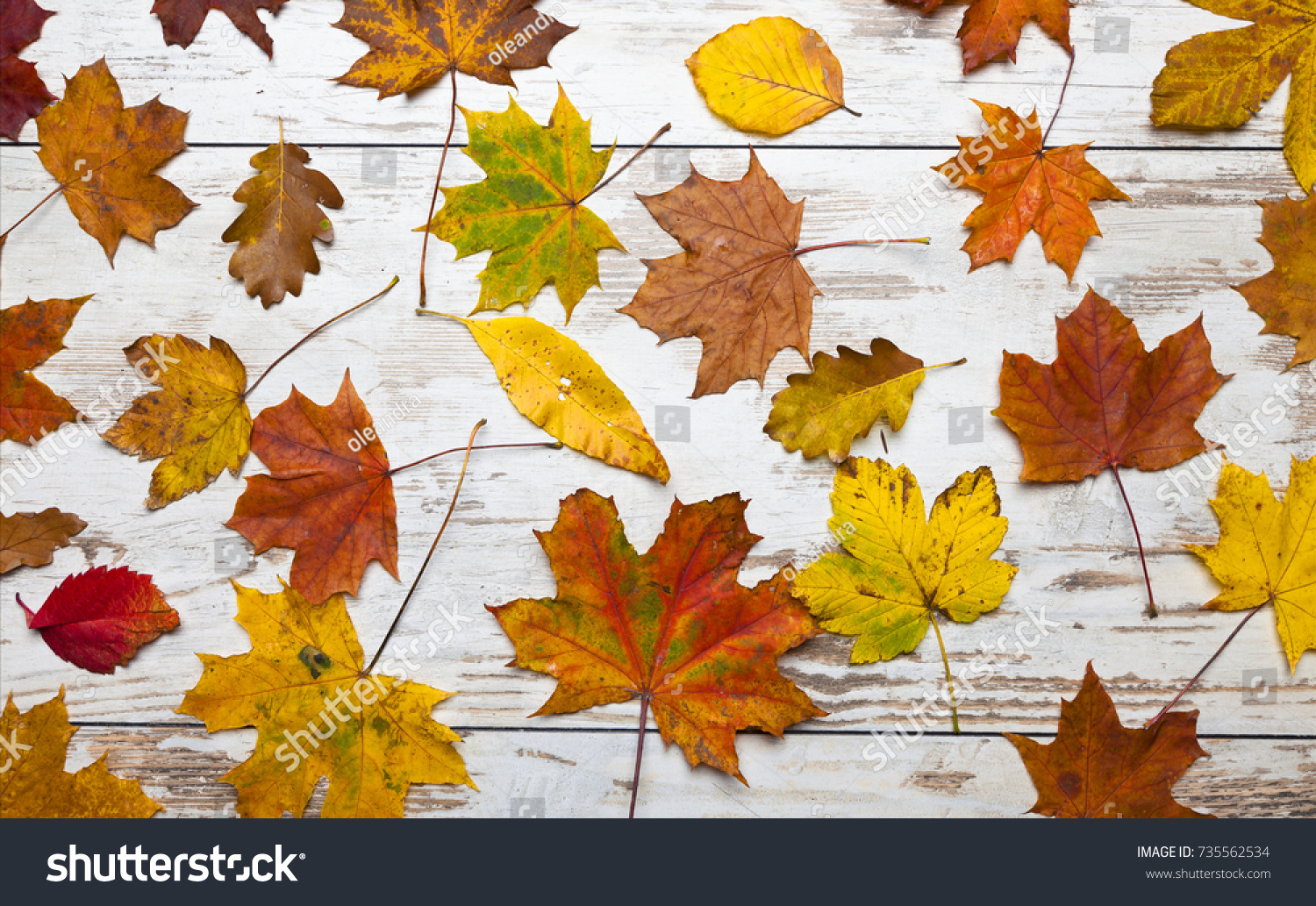 fall wallpaper colorfull leaves on vintage stock photo edit now
