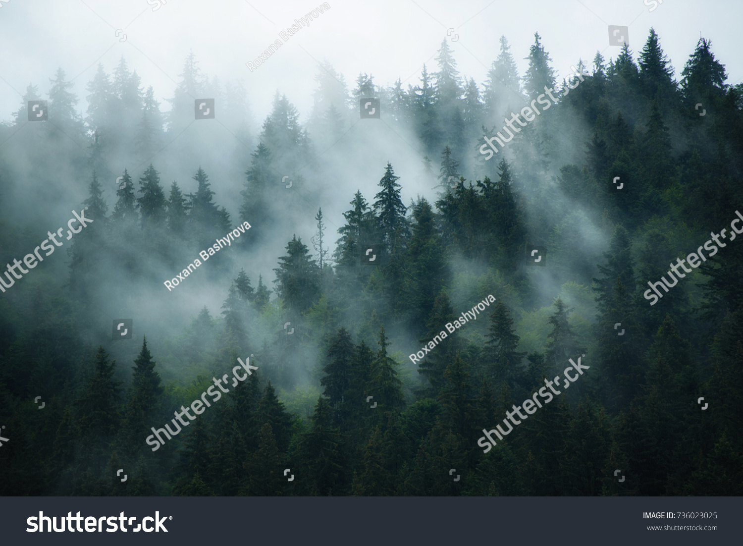 Misty landscape with fir forest in hipster vintage retro style #736023025
