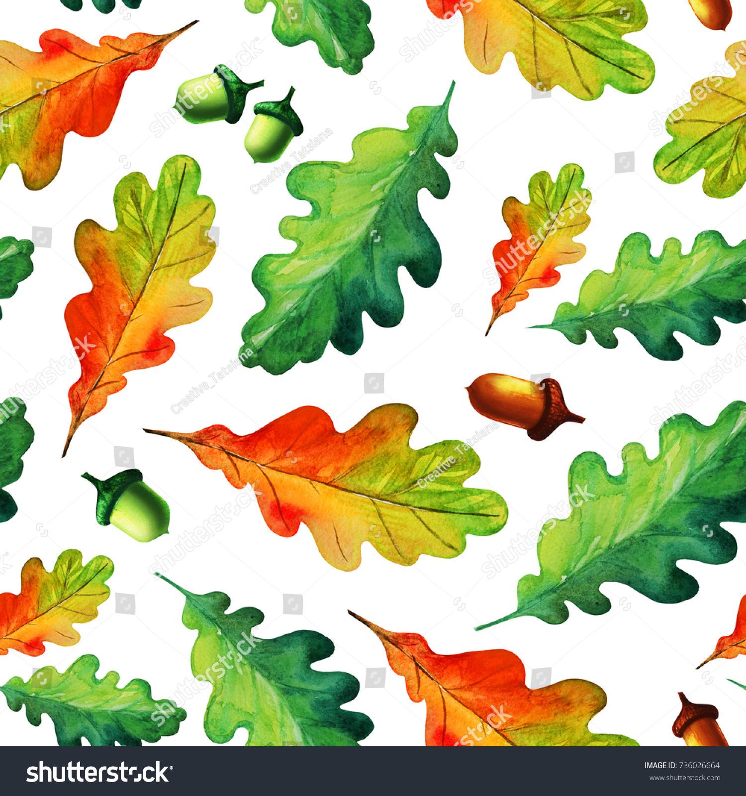 Colorful Watercolor Oak Tree Leaves Acorns Stock Illustration ...