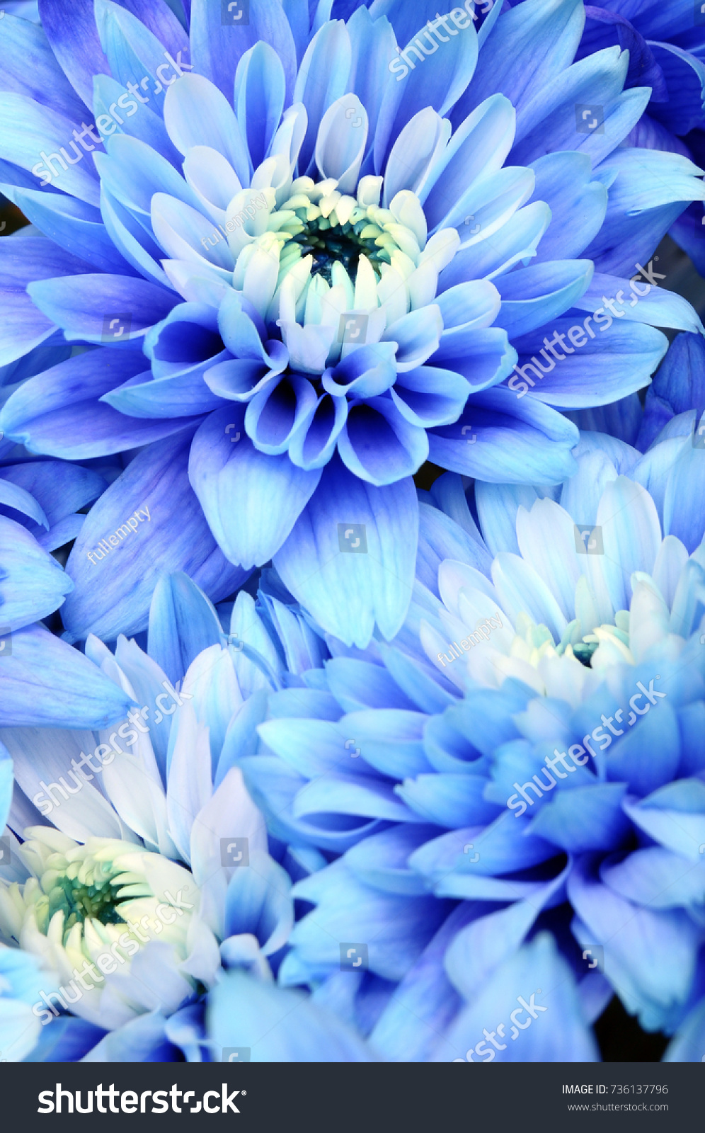 Blue Flowers Background Blue Petals Pistils Stock Photo Edit Now