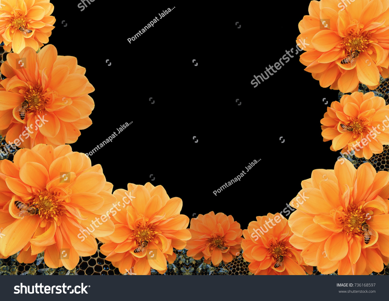 Yellow Flower On Isolated Black Background Stock Photo Edit Now 736168597