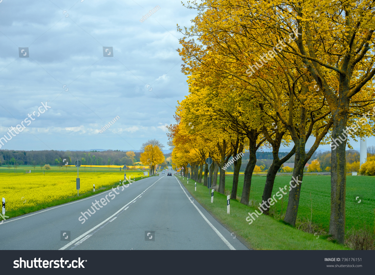 Small Road Yellow Flowers Trees On Stock Photo Edit Now 736176151