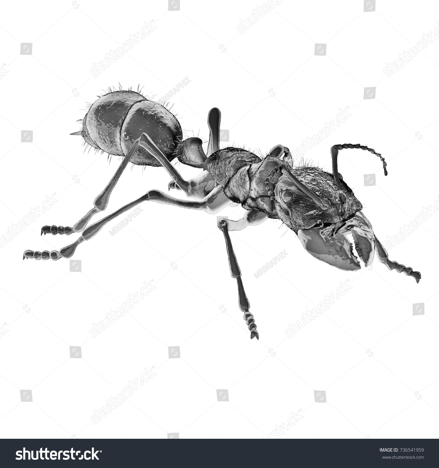 Scientific Illustration Bullet Ant 3 D Digital Ilustración de ...
