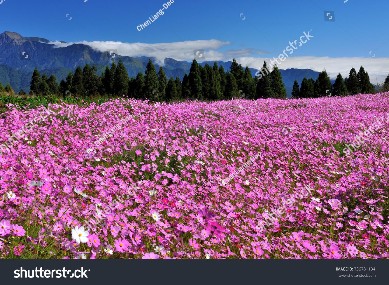 Stay in the beautiful wild flowers field garden ez canvas id 736781134 izmirmasajfo