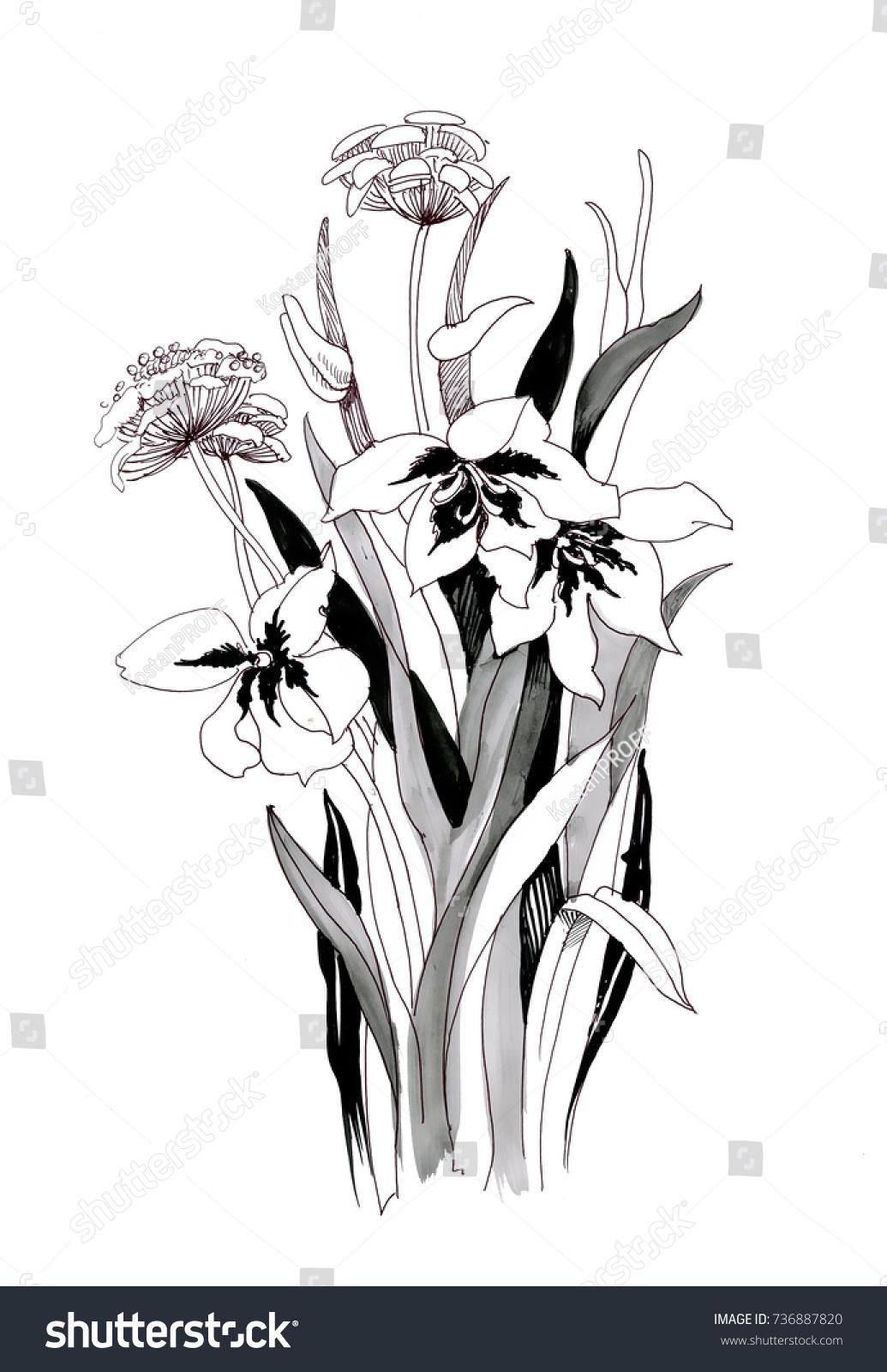 Hand Drawn Painting Black White Flowers Stock Illustration 736887820