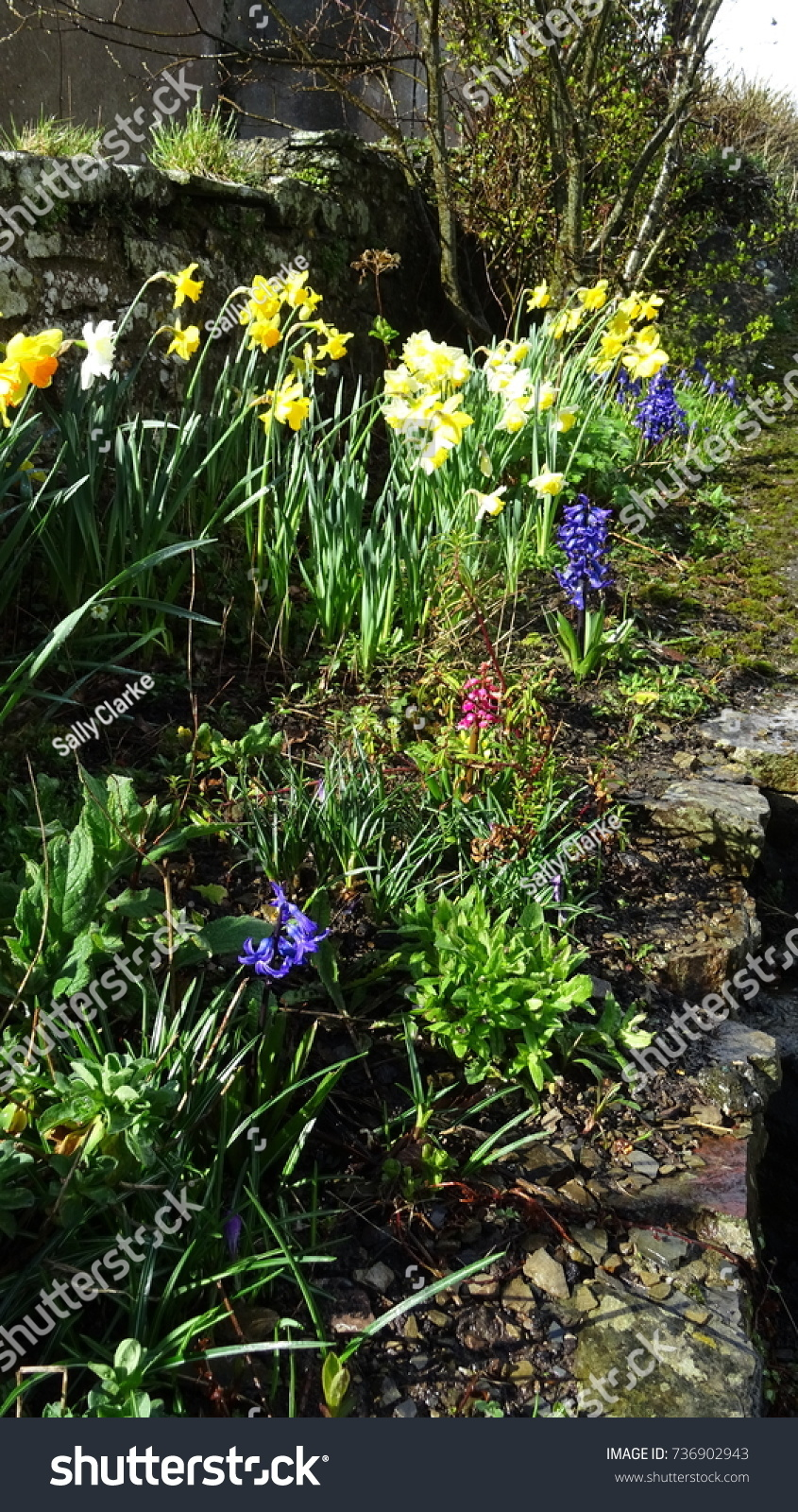 Spring Flowers Wave Prettily Gentle Breeze Stock Photo Royalty Free