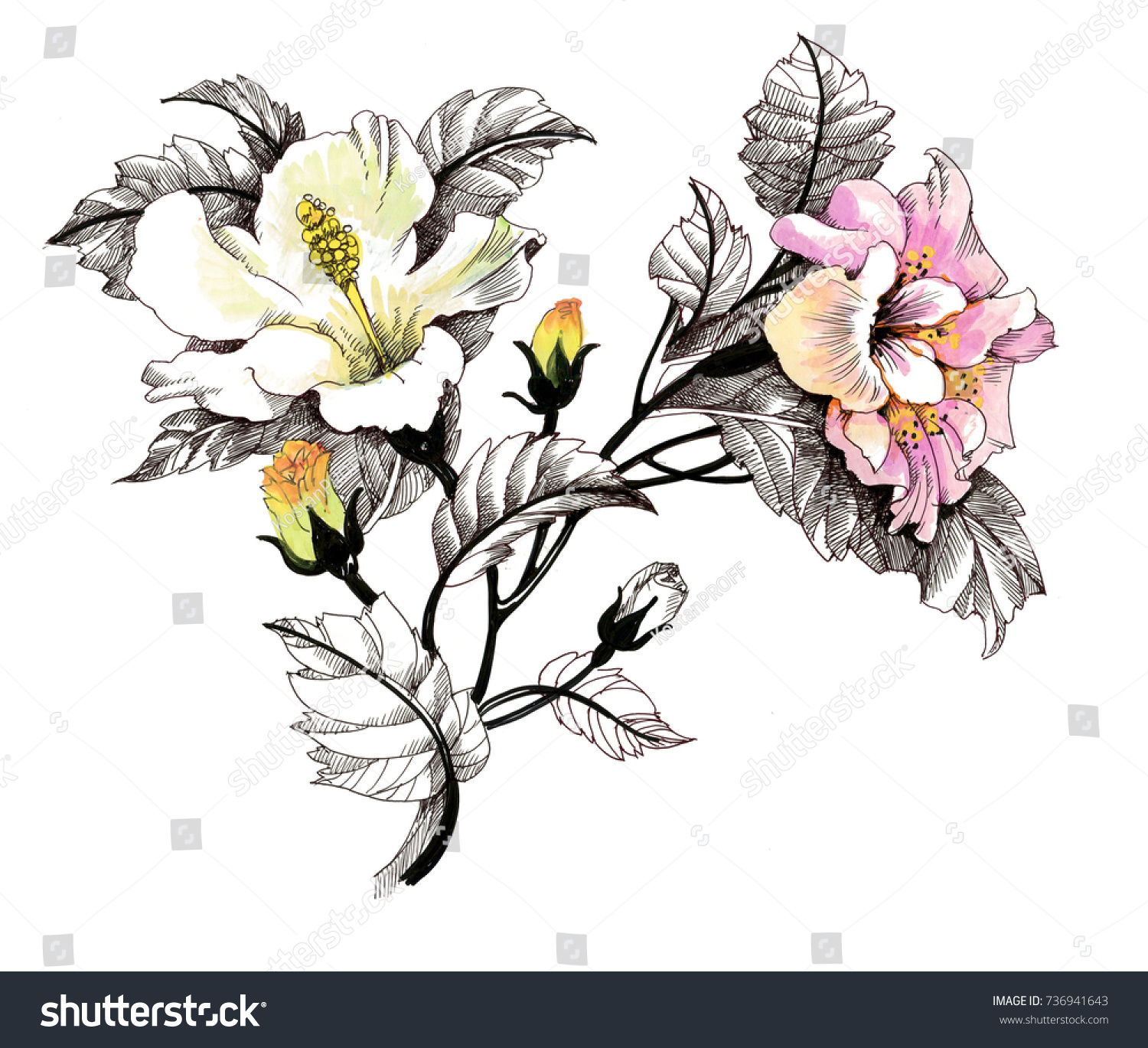 Hand Drawn Painting With Colorful Flowers On White Background Ez