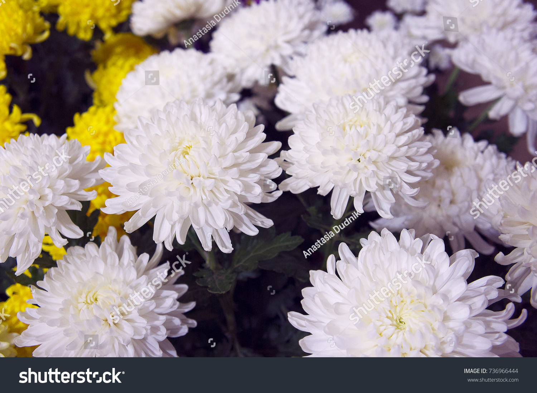 White Chrysanthemums Flower Shop Bouquet Chrysanthemums Stock Photo