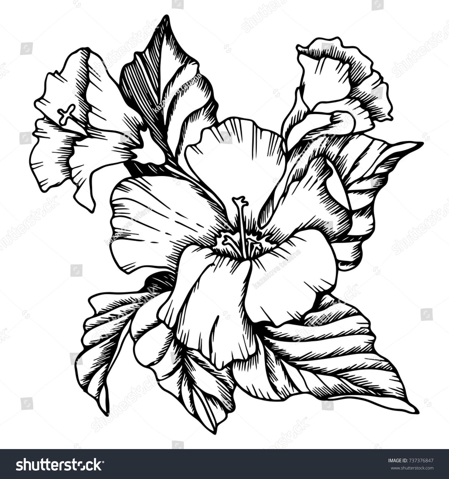 Vector hibiscus flowers blackandwhite solution drawn stock vector vector hibiscus flowers black and white solution drawn manuallye design izmirmasajfo