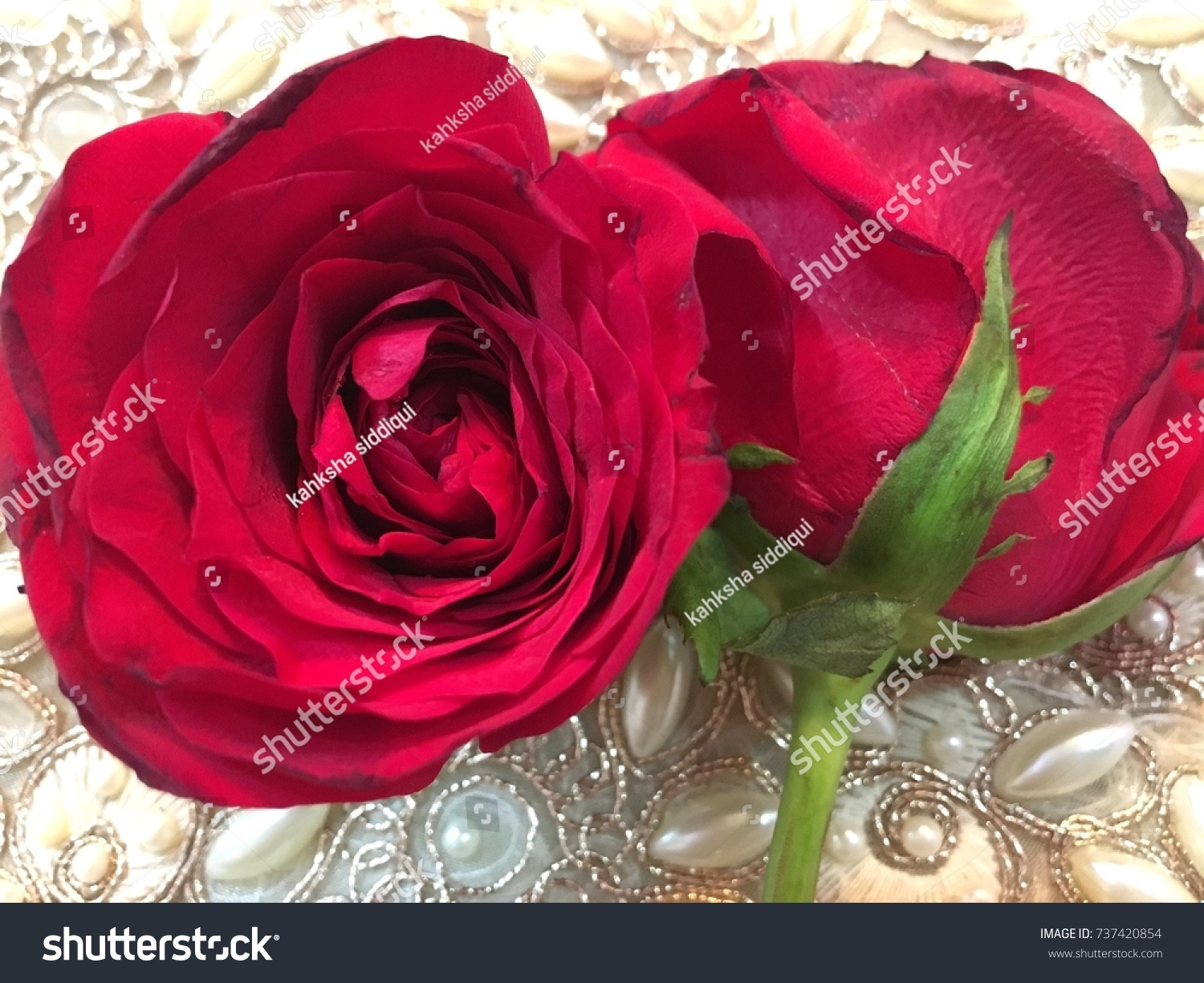 symbol love beautiful red rose wallpapers desktop stock photo (edit