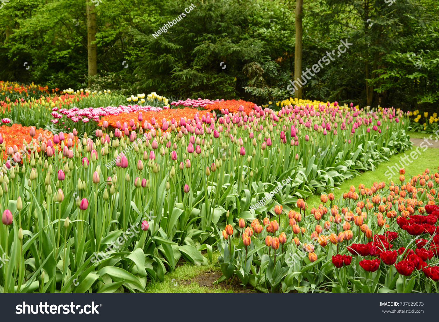 Spring flower beds tulips tulipa park stock photo edit now spring flower beds with tulips tulipa in a park colorful spring flowers in mightylinksfo