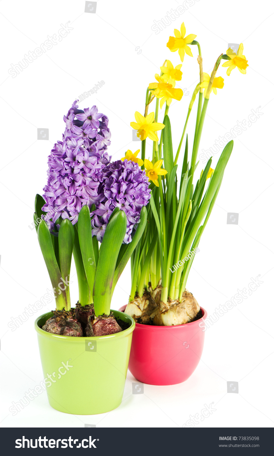 Beautiful Spring Flowers Hyacinth Narcissus Stock Photo Edit Now