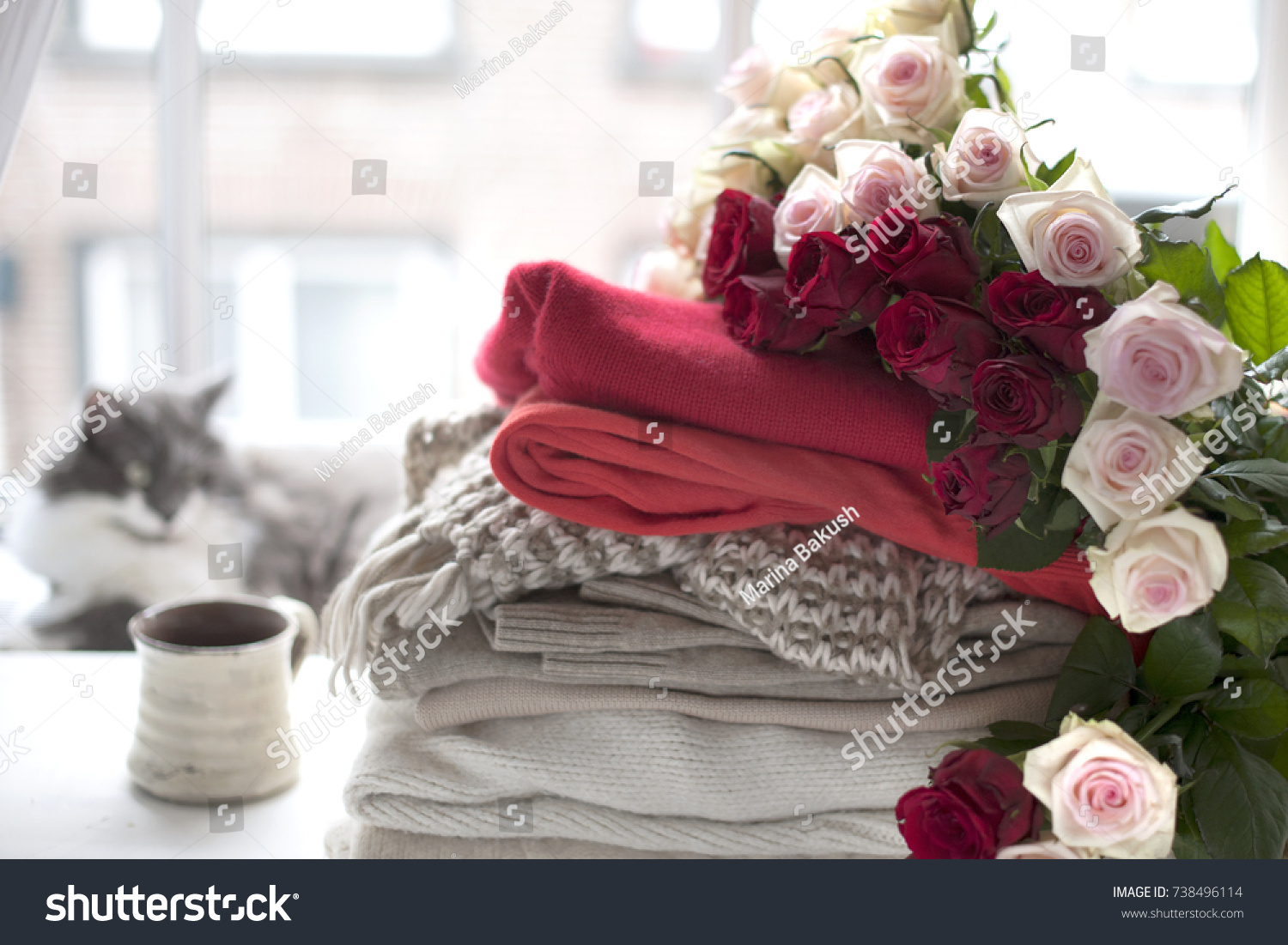 Bouquet Roses On Winter Clothes Cat Stock Photo (Royalty Free ...