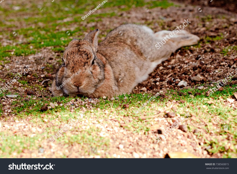 Cute Wild Bunny Rabbits In Japans Rabbit Island Okunoshima