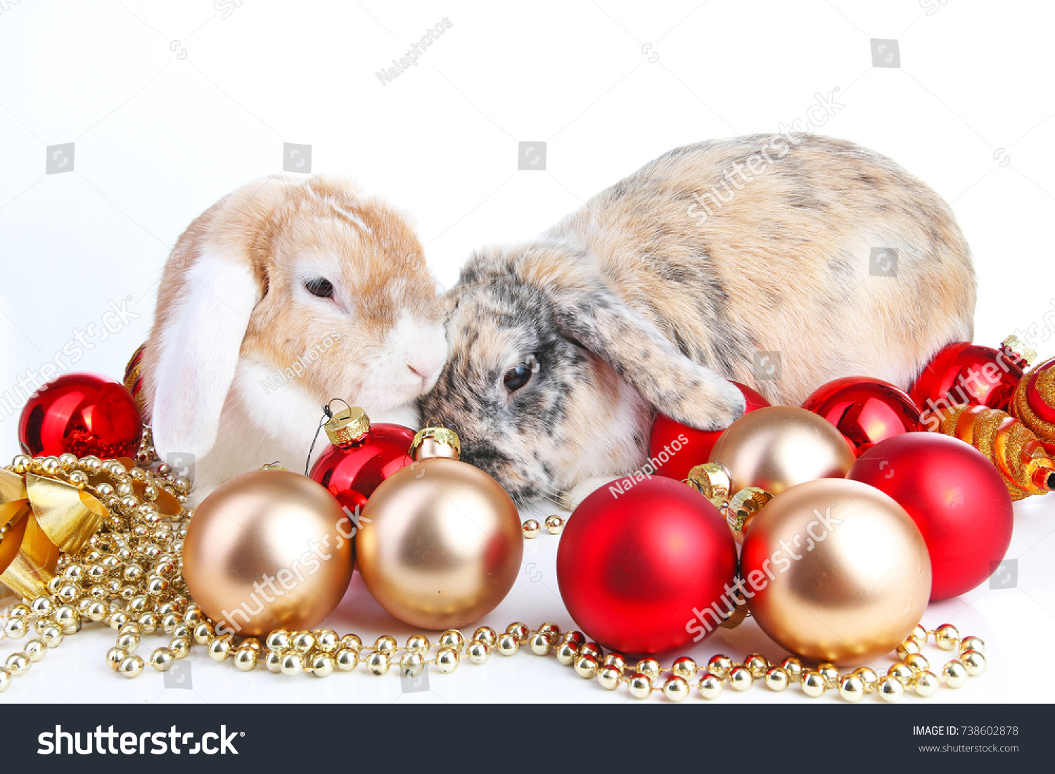 christmas animals cut lop eared rabbit pet friends on isolated white studio background rabbits