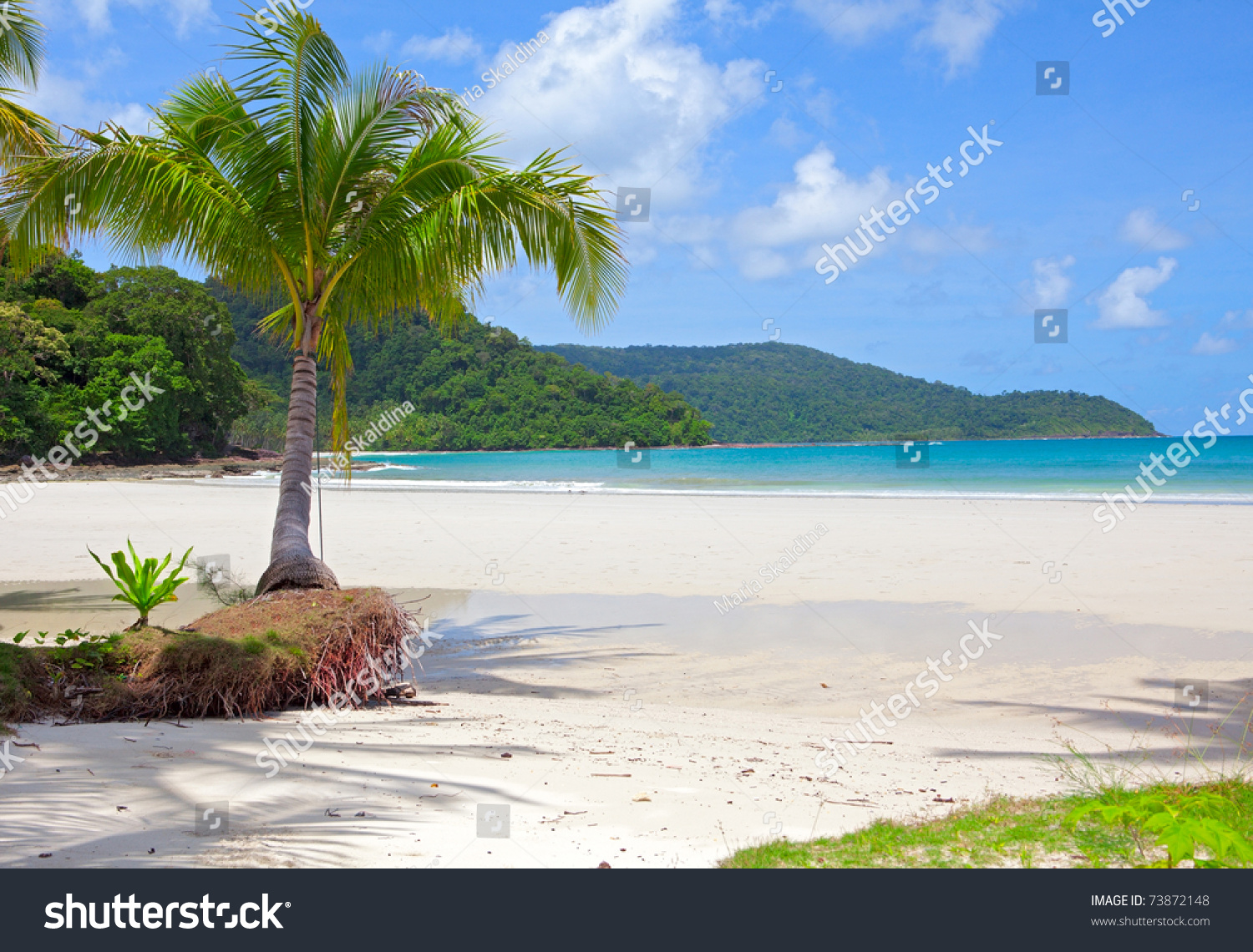 Palm tree on white sand beach and island in the sea under for White sand beach vacations