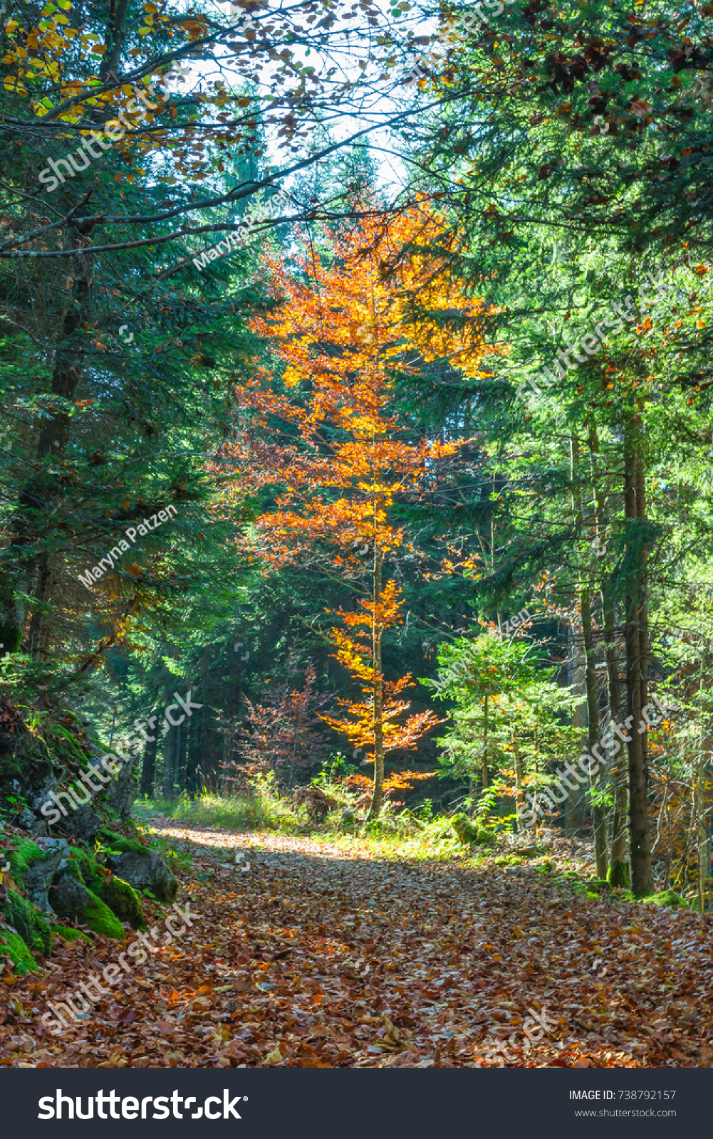 Bright Color Palette Autumn Forest Stock Photo 738792157 - Shutterstock