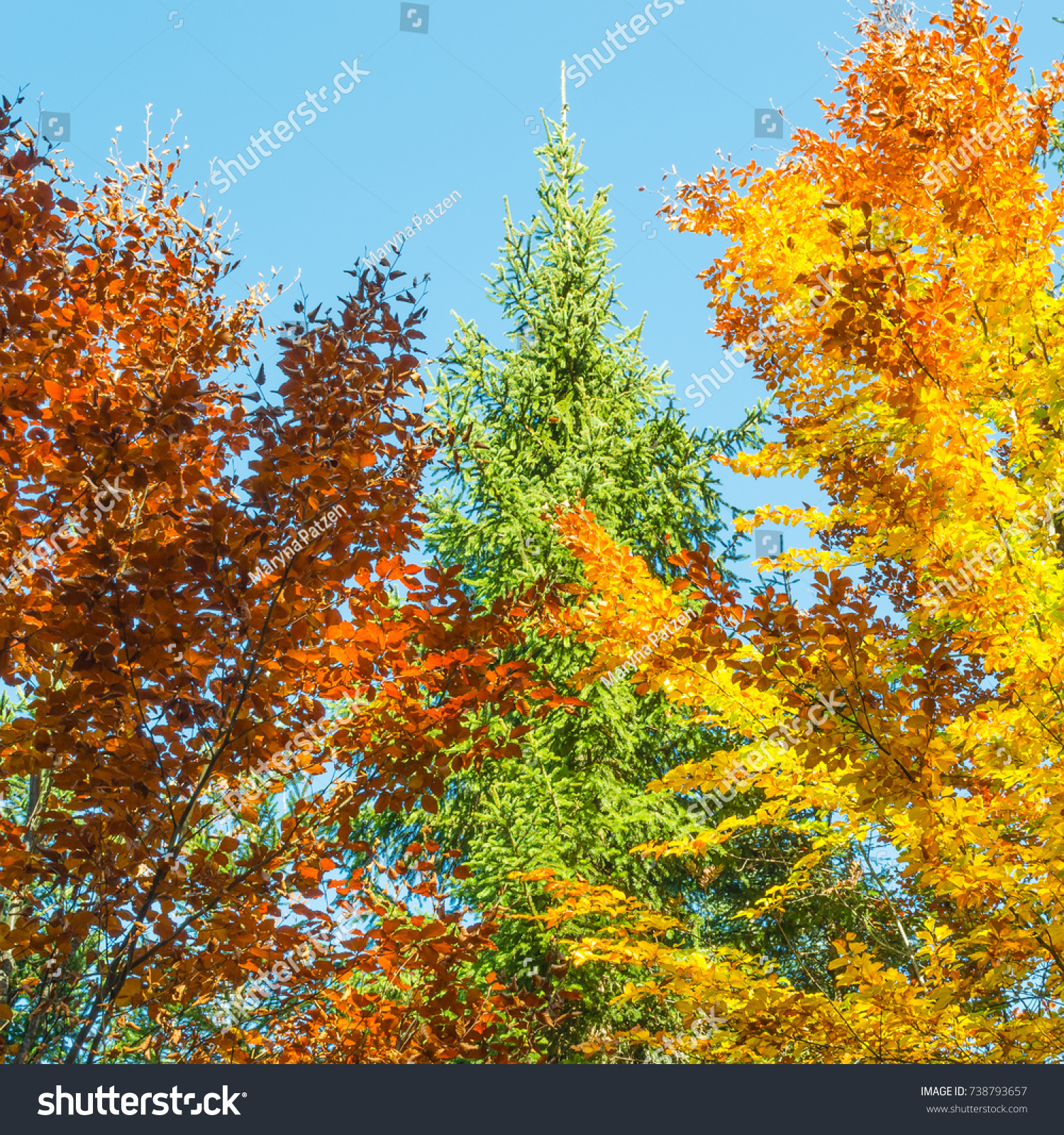 Bright Color Palette Autumn Forest Stock Photo 738793657 - Shutterstock