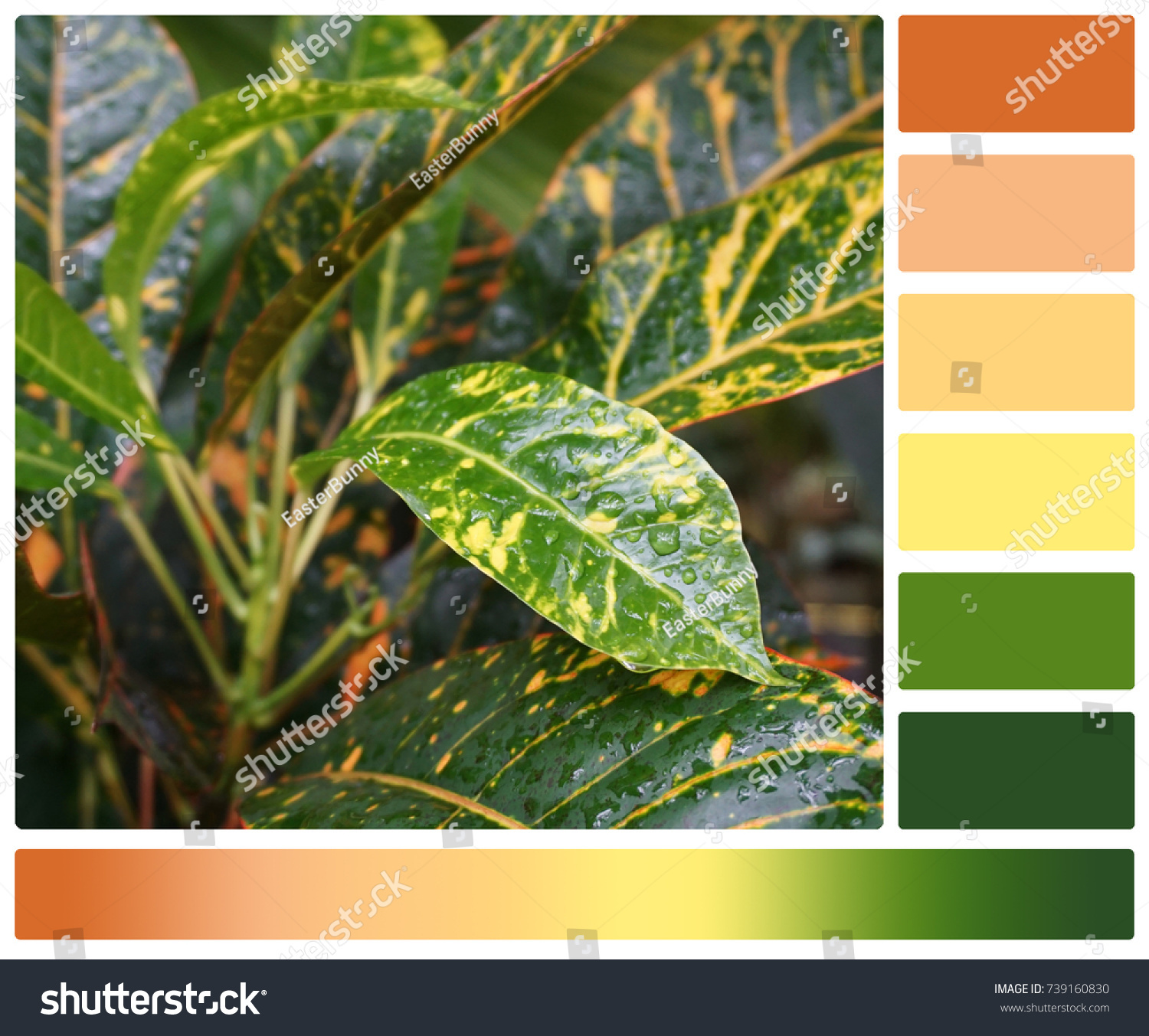 Tropical Plant Palette Complimentary Color Swatches Stock Photo ...