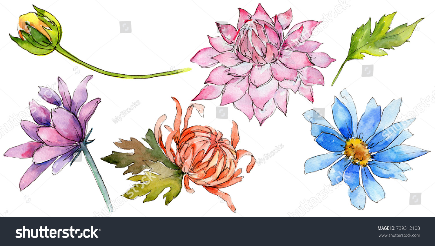 Wildflower aster flower watercolor style isolated stock illustration wildflower aster flower in a watercolor style isolated full name of the plant aster izmirmasajfo Choice Image