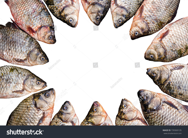 Fishing Title Frame Fish Carp Stock Photo (Royalty Free) 739369135 ...
