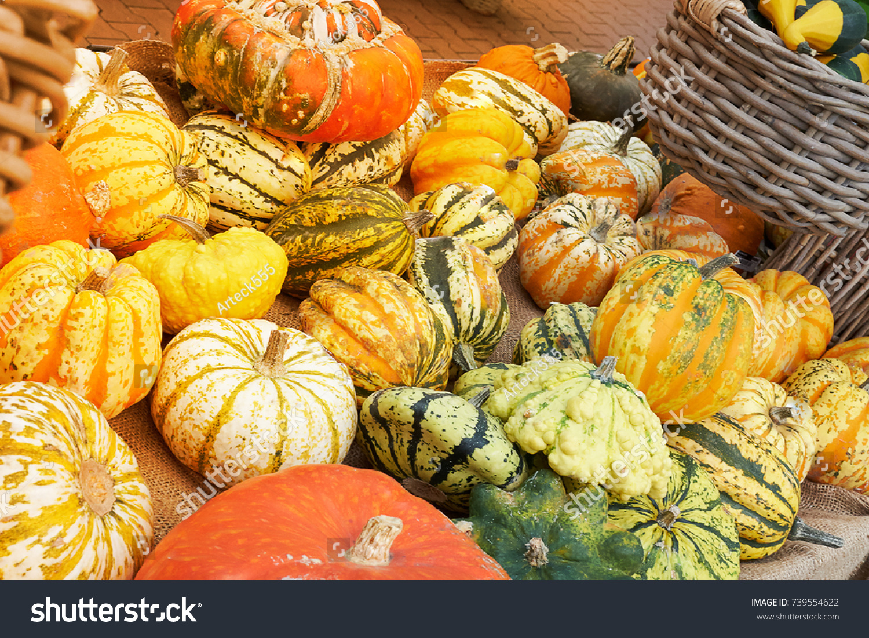 Herbsternte Pumpkin Stock Photo Edit Now 739554622 Shutterstock