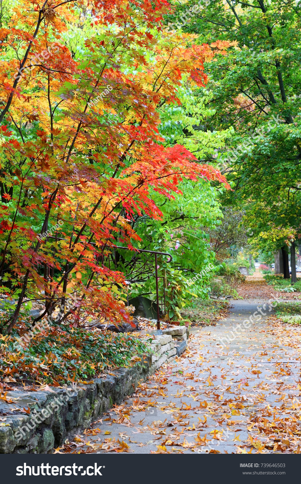 Amazing Fall Landscape Street View Small Stock Photo (Royalty Free ...