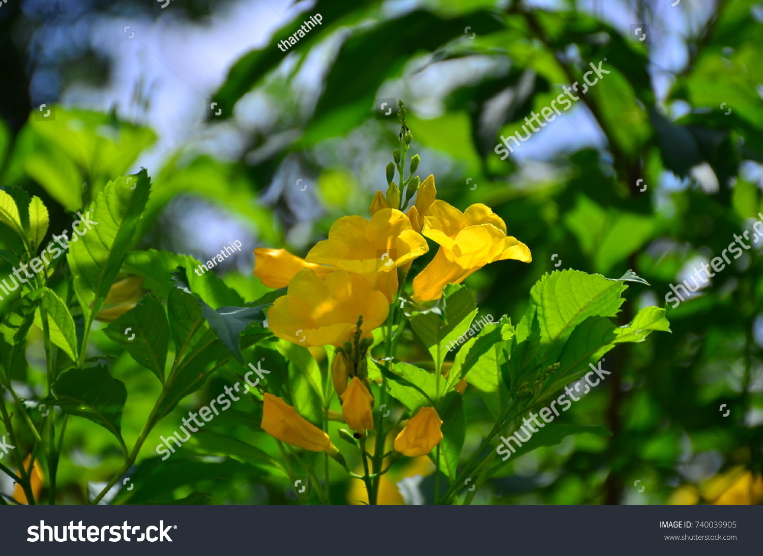 Beautiful yellow flowers in the garden ez canvas id 740039905 izmirmasajfo