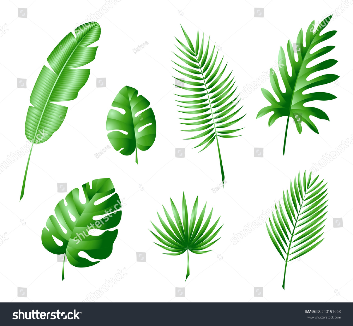 Leaves Tropical Trees Palm Trees Color Stock Vector HD (Royalty Free ...