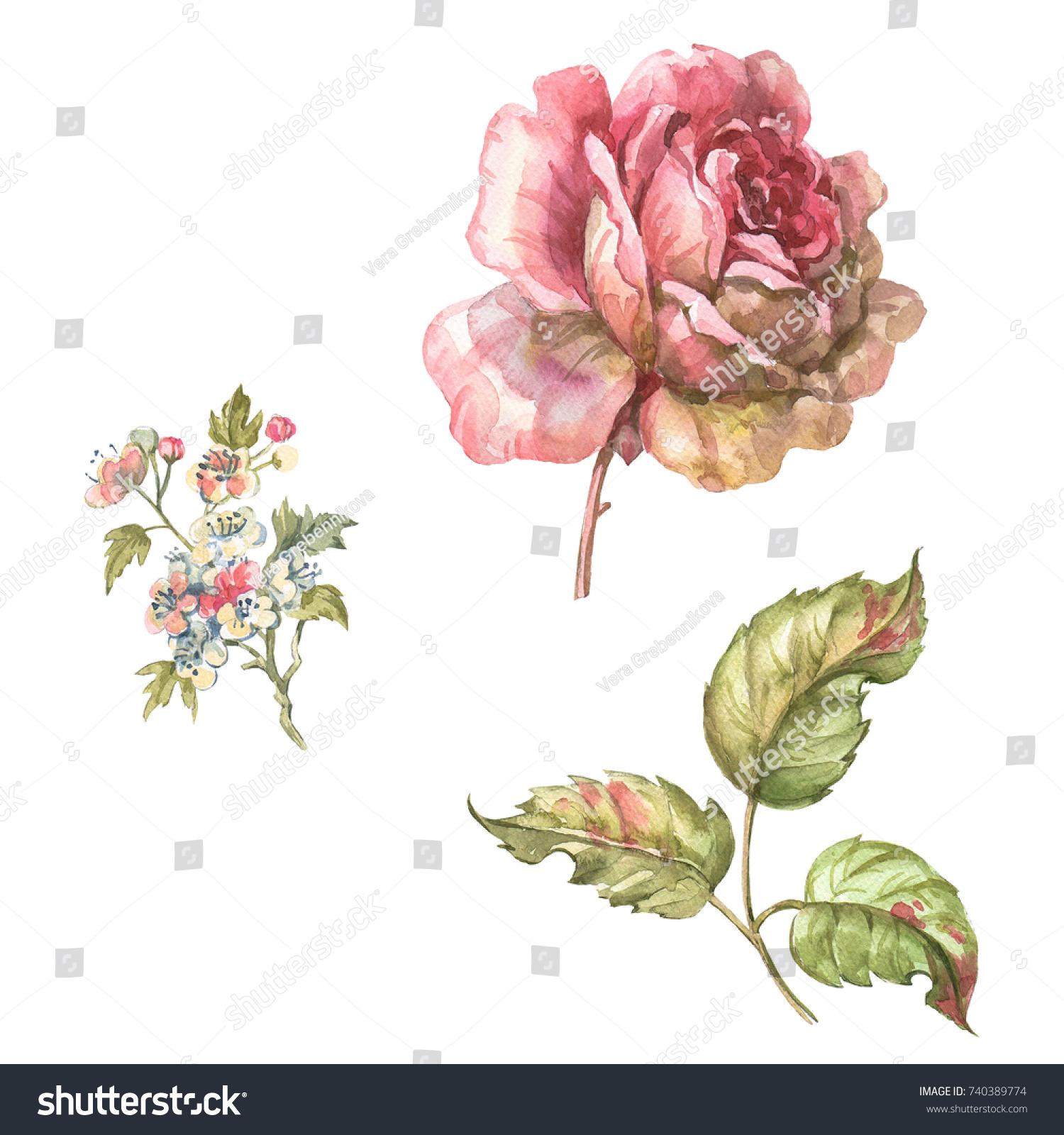 Style Marie Antoinette Rose Watercolor Illustration Stock ...