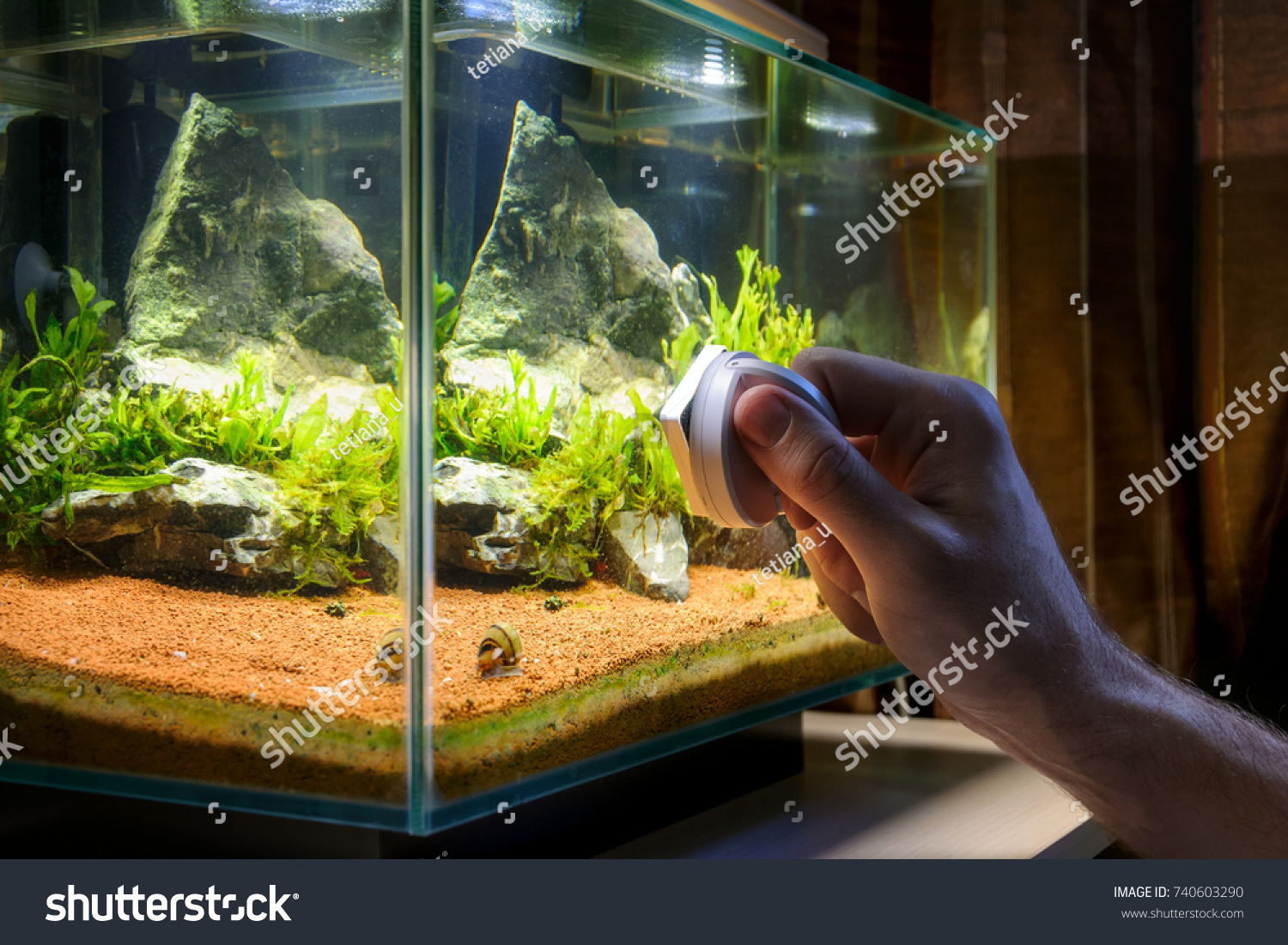Home Aquarium Cleaning Using Magnetic Fish Stock Photo Edit Now Thermometer Original For Aquascape Tank Cleaner Man Scrubbing Glass Of Decorative