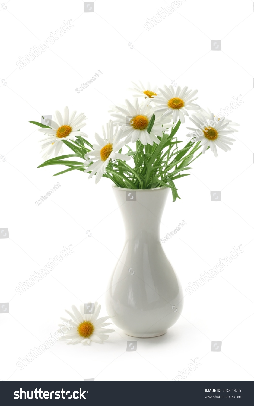 Daisies vase on white background stock photo 74061826 shutterstock daisies in vase on white background reviewsmspy