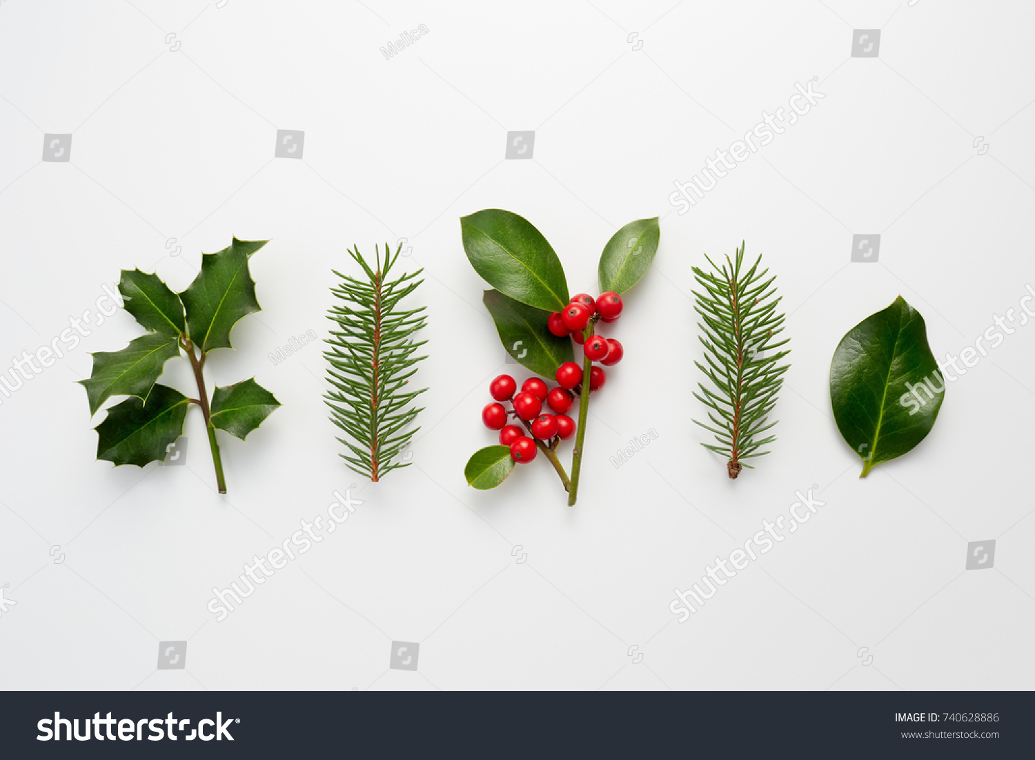 Collection Decorative Christmas Plants Green Leaves Stock Photo