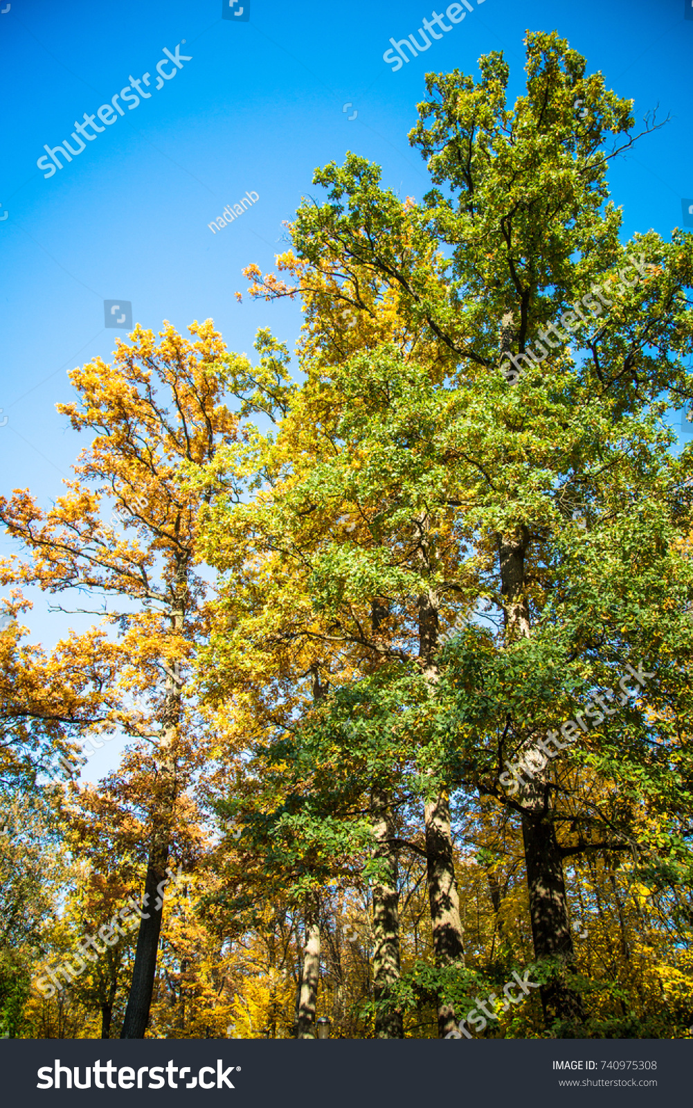 Beautiful Multicolored Trees Forest Against Blue Stock Photo ...