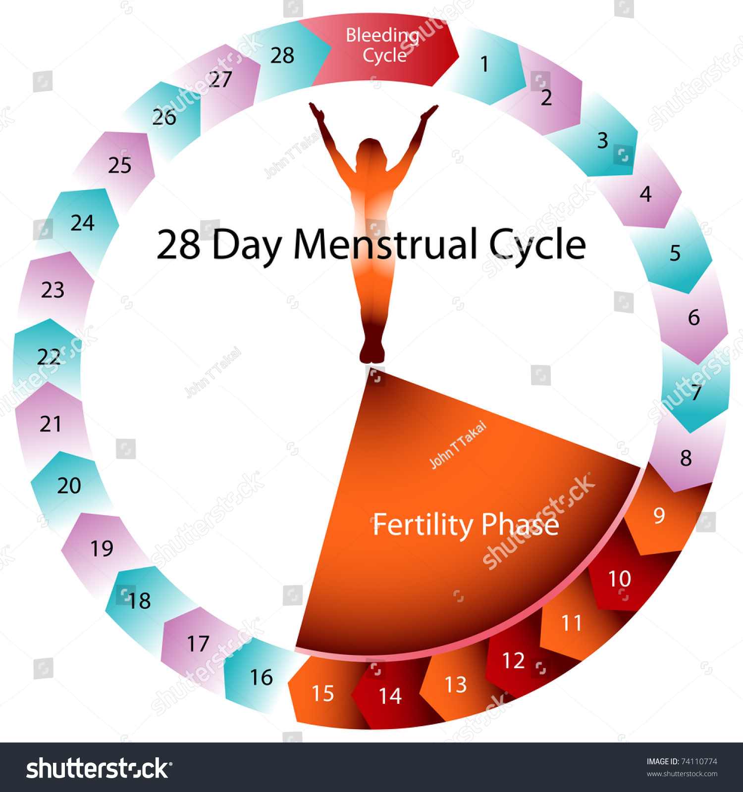https://image.shutterstock.com/z/stock-vector-an-image-of-a-menstrual-cycle-chart-74110774.jpg