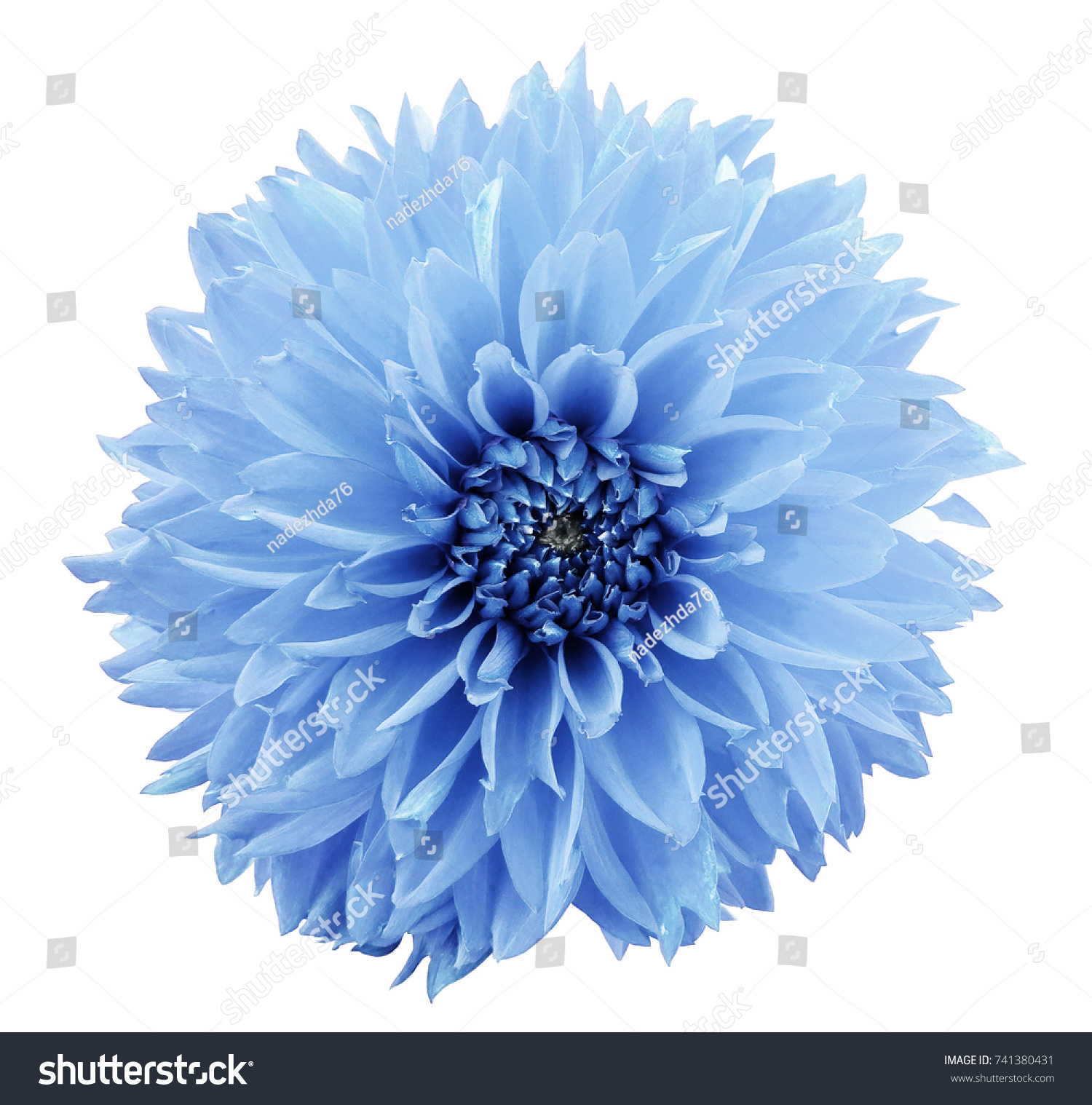 Flower Light Blue Dahlia White Isolated Stock Photo Edit Now