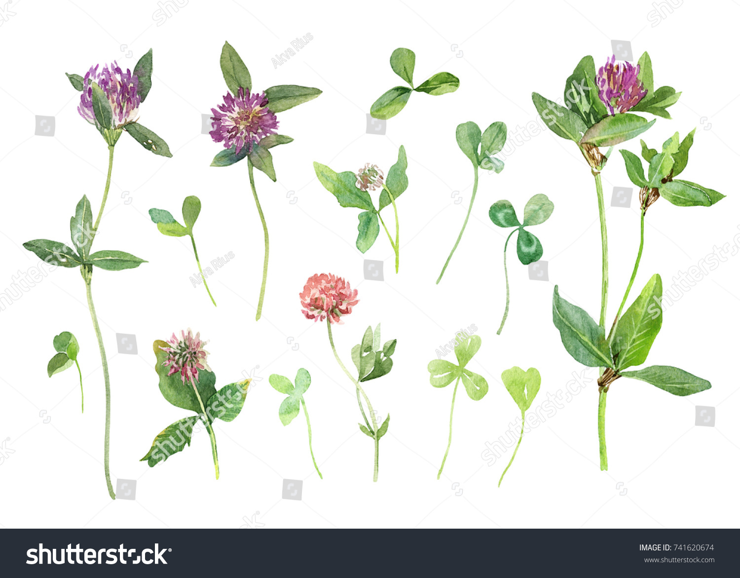 Pink Clover Set Watercolor Flowers Leaves Stock Illustration