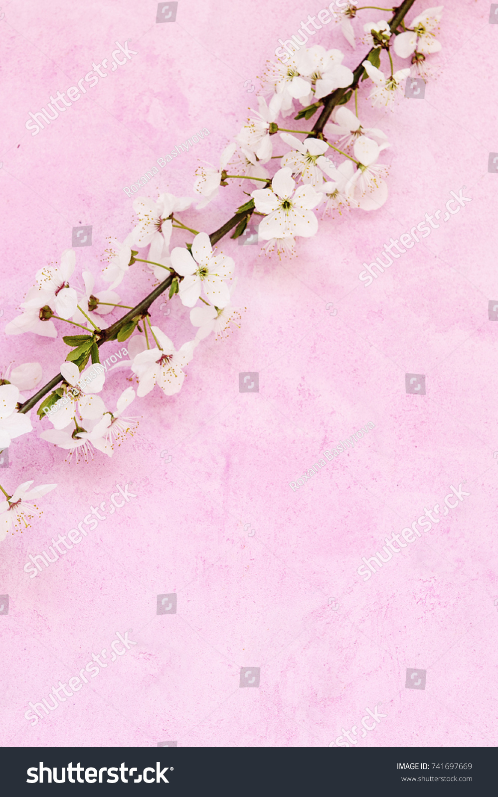 White Apricot Spring Flowers On Grunge Stock Photo Edit Now