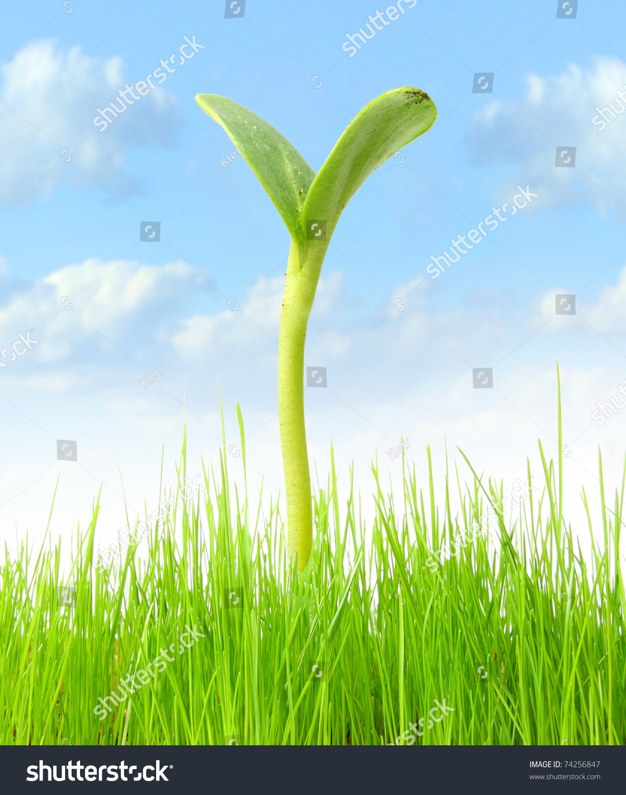 Young green plant growing on field stock illustration 74256847 shutterstock - Successful flower growing business ...