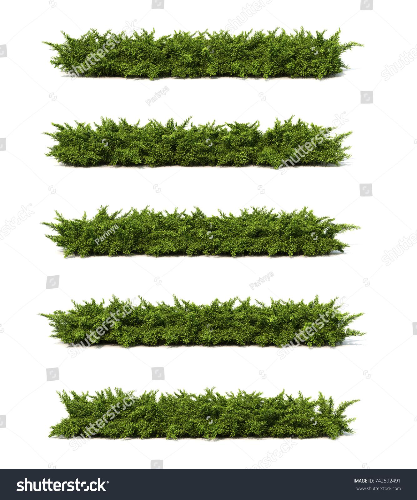 3 D Rendering Creeping Juniper Stock Illustration 742592491