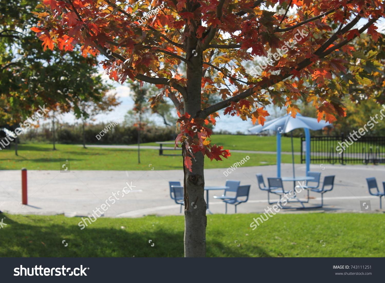 Fall Foliage By Empty Picnic Area Stock Photo (Royalty Free ...